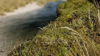 Skyrim SE 2020 - Tamrielic Textures SE 1 - Landscapes