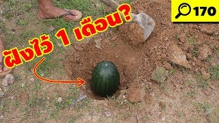 เอาแตงโมไปฝังดิน 1 เดือน จะเกิดอะไรขึ้น? | พิสูจน์ 170 | เพื่อนซี้ ตัวแสบ