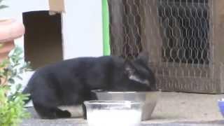 """Katze Mimi – Erste Schritte – Mimis Katzenbabys hören auf Zuruf """"Mimi"""" und kommen ins Gartenhäuschen"""