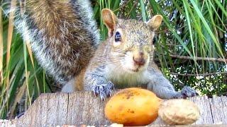 Wild Squirrel Diet Preferences