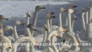 東北海道観光情報11厳冬の屈斜路湖と白鳥弟子屈町