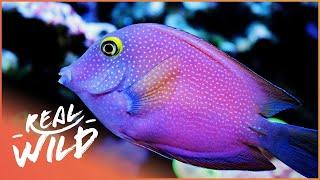 Wonders Of The Reef | Alien Reef | Wild Things Shorts