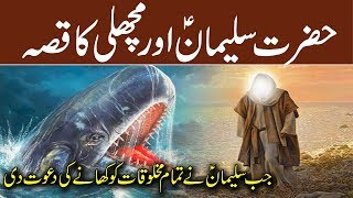 Hazrat Suleman AS Aur Machli | Prophet Solomon & Fish | Islamic Stories Rohail voice
