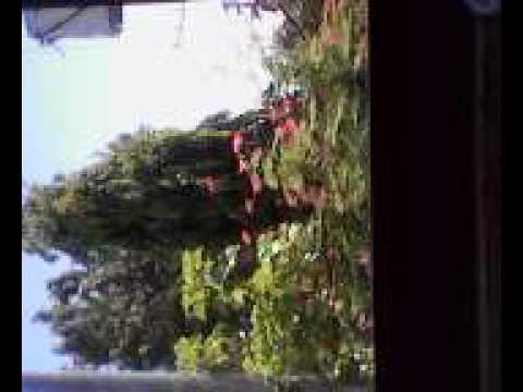 Halamang-singaw buhok katutubong remedyong