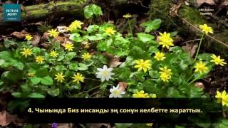 """Кыргызча Куран """"Ат-Тийн""""- сүрөөсү"""