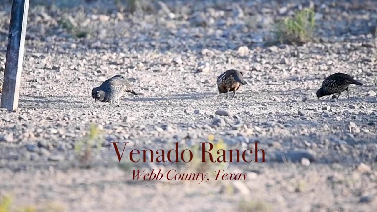 Venado Ranch