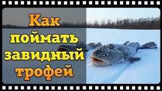 Налим ловля зимой на реке