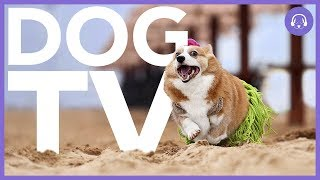 Dog TV: 8 Hours of Entertainment for Your Dog!