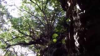 preview picture of video 'Yajagama Cave Kumejima Okinawa Japan 久米島ヤジャーガマ洞窟'