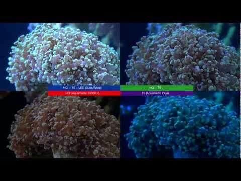 LED vs T5 vs HQI - Light reef tank story