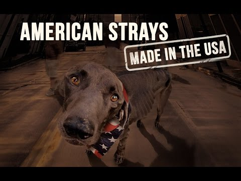 American Strays Made In The USA - The Solution to the Homeless Dog Epidemic