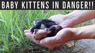 Urgent action! Feral mom gave birth to 4 kittens