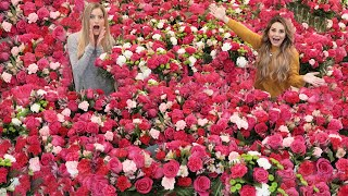 Surprising My Friend With 1000's of Flowers For Her Birthday! thumbnail