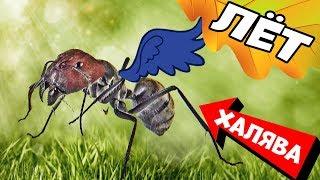 Как собрать муравьев для лекарства