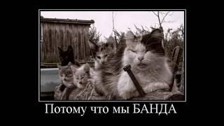 Приключение котэ/ Смешные видео про котов