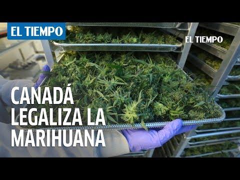 Canadá, primer país que legaliza el consumo de marihuana   EL TIEMPO