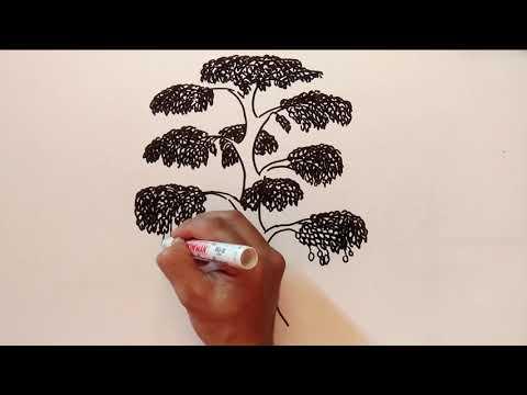 Tips dan Trik Cara Menggambar Pohon dan Orang