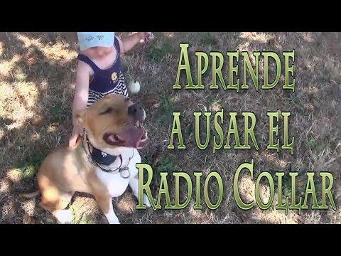 Aprendiendo a usar el Radio Collar. Curso de Adiestramiento Online. www.canine-service.com