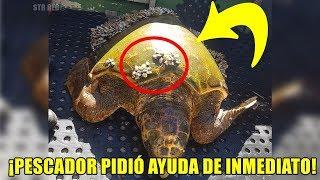 Un pescador encontró esta extraña tortuga, al mirar su caparazón se dio cuenta de algo terrible