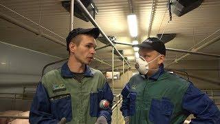 Работа на финской ферме. Где работают мигранты в Финляндии?!