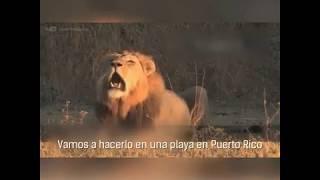 Животные поют Деспасито!