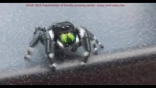 Friendly jumping spider looking for ways to jump on me....And he...?