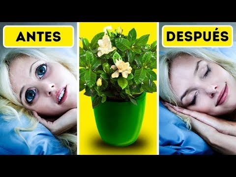 6 Plantas Que Te Ayudarán a Dormir Mejor En Tu Habitación