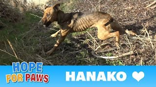 A starving dog living by the freeway made it really hard for us to save her life.  Please share.