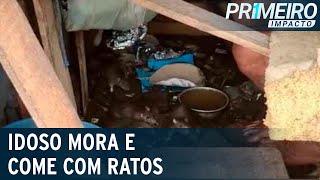 Idoso divide barraco e comida com ratos em Belém   Primeiro Impacto (05/02/21)
