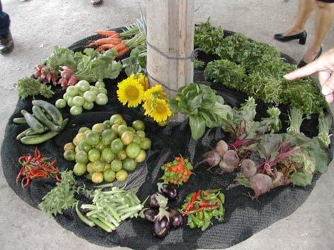 Beneficios de la Horticultura Limpia - TvAgro por Juan Gonzalo Angel