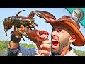 Download Youtube: PINCHED by a LOBSTER!