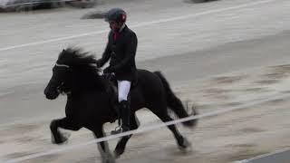 Basler Islandpferde-Sporttage 2018