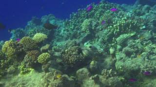 preview picture of video 'South Pass Reef Carlson Island Kwajalein Atoll'