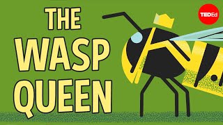 Licking bees and pulping trees: The reign of a wasp queen - Kenny Coogan