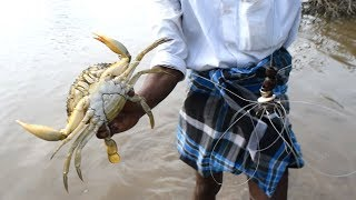 Unique Way of Mud Crabs Catching / Never Seen Before / Handline Crabs catch