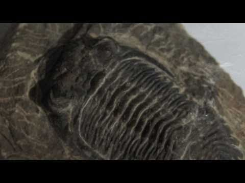 The Trilobite Pool - Video