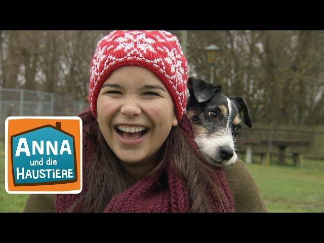 Video Pronunciation of Hunde in German