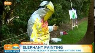 Perth Zoo Elephant Art Part 2 | Today Perth News