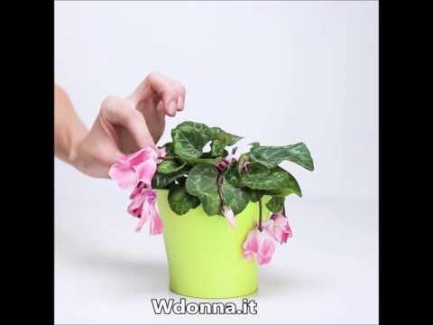 Concime naturale per rinvigorire le piante