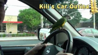 Kili Senegal Parrot - Driving Car and Birdie Phone
