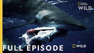 Shark vs. Tuna (Full Episode) | National Geographic