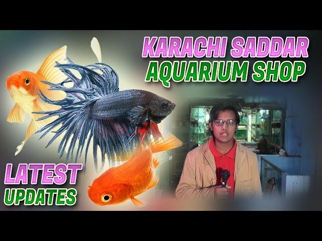 Saddar Karachi Aquarium Shop Guppy Carp Gold Fish Cichlid Discus Denison Barb fish for sale