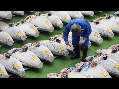 Τόκιο: Δημοπρασία τόνων