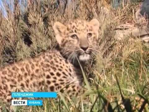 В геленджикском сафари-парке родились леопарды