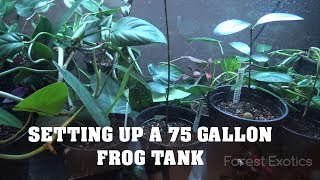 SETTING UP A 75 GALLON FROG TANK