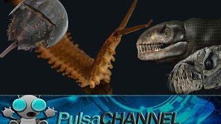 TOP 10 Fósiles Vivientes || Animales Prehistóricos en la Actualidad ||
