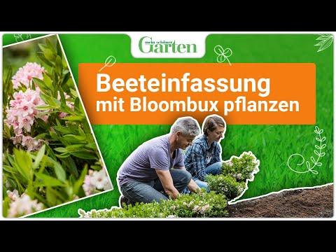 Eine Beeteinfassung aus Bloombux pflanzen