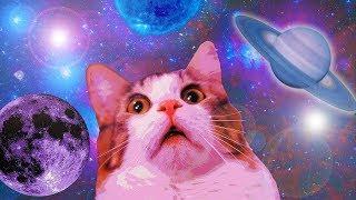 Смотреть онлайн Курьезная подборка с мемами про котов