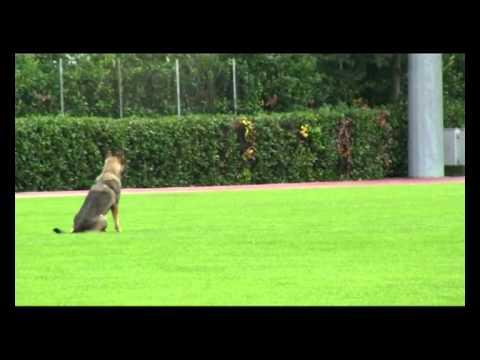 Preview video Campionato di addestramento 2012