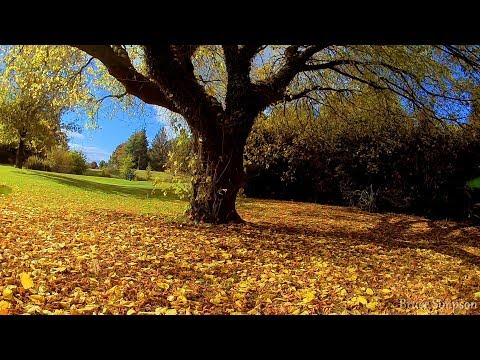 look-ma-no-dji--drone-in-the-park-at-tokoroa-new-zealand